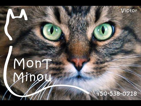 Montréal/Longueuil - Garderie/Pension/Hébergement Pour Chats - Montréal/Longueuil