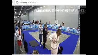 Евразия-2017 пудель малый классика, кобели