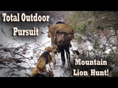 Mountain Lion Hunt With Hounds In New Mexico Mountains! Dog Hunting