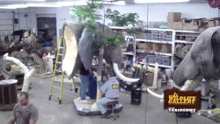 Taxidermy Time Lapse -  Elephant