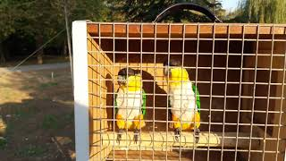 выставка декоративной птицы г.Симферополь 02.09.18г