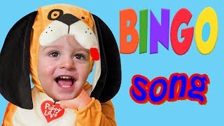 Bingo Nursery Rhymes Song for Kids and Babys with Lyrics and action by LetsGoMartin