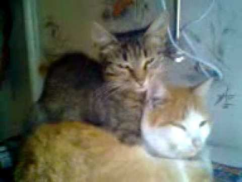 кошки обнимаются картинки