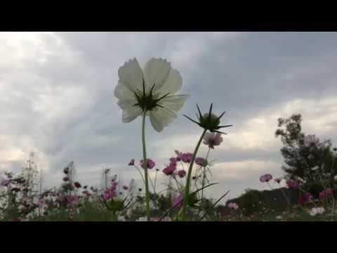 Suncheon bay gardens