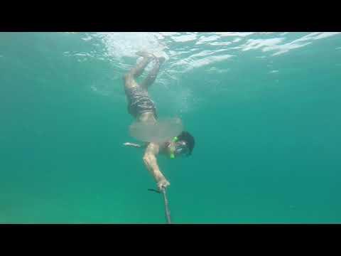 Hawaii: Jellyfish