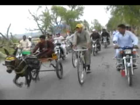 ghourghushti donkey race