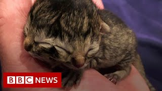 Kitten born with two faces - BBC News