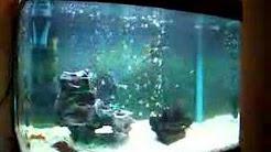 20 Gallon Aquarium - Converting to Planted Tank