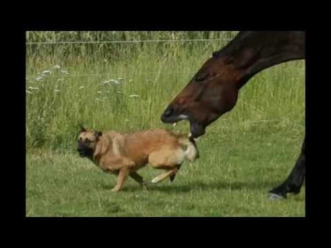 horse tries to bite dog