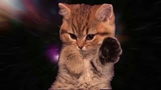 Space Nyan cat няшка милашка котёнок в космосе летит управляя лапками