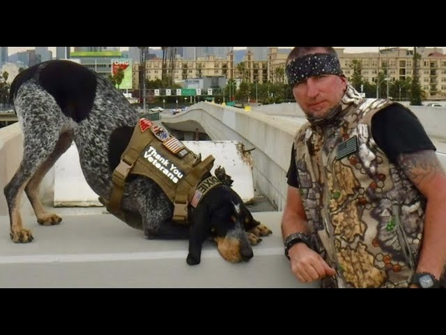 Dixie the Praying Dog is an international TV star
