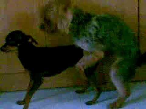 Dog having Sex with Cat 4 from YouTube · Duration:  1 minutes 39 seconds