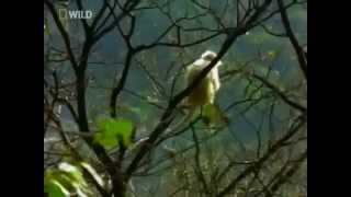 видео Бутан