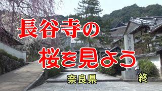 牡丹の花で有名な奈良県桜井市の長谷寺は春は桜も見ものです。2016年3月...