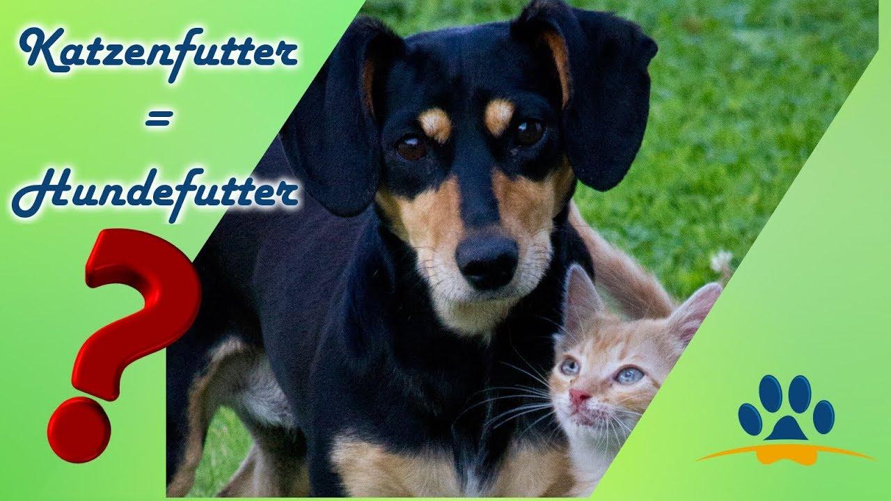 Deswegen Darf Dein Hund Kein Katzenfutter 2 Wichtige Gründe