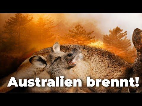 BREAKING NEWS Australien - Mega-Feuer Entsteht! Koalas Und Kängurus Sterben! - Clixoom Nature