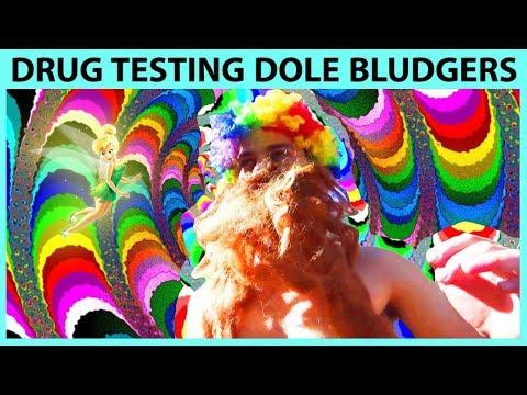 Drug Testing Dole Bludgers