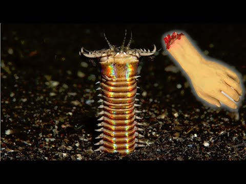 Alien Worm VS Everything (pufferfish, Angler, Human???)