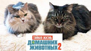 ТАЙНАЯ ЖИЗНЬ ДОМАШНИХ ЖИВОТНЫХ 2 в Реальной жизни Мультик Кошки одни дома