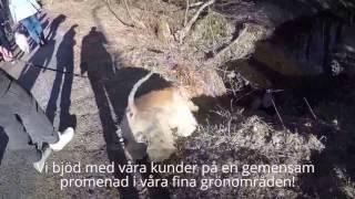 AMNIS HUNDHUS DAGISKVÄLL 2017