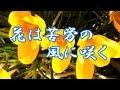 花は苦労の風に咲く 杜このみ COVER 3月6日発売