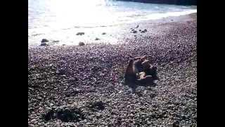 Копия видео собака на море Крым Судак 2015(, 2015-03-10T01:20:34.000Z)