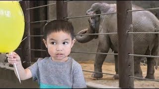 Vlog 46 - Zoos Are Great For Kids | How About The Animals?