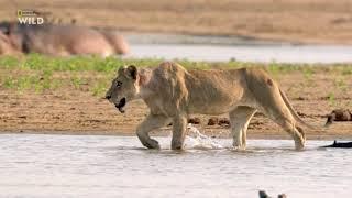 Африканские охотники 3 сезон 3 серия - Взросление неудачника