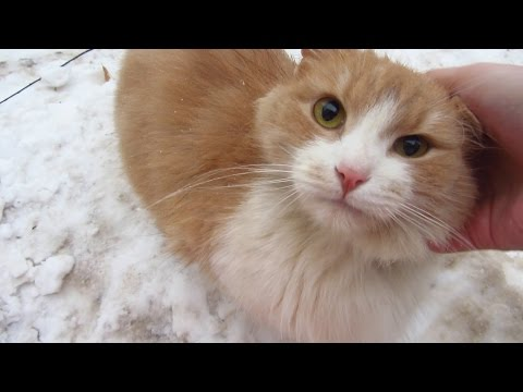 New cute cat on the snow