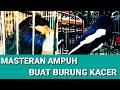 Tengkek Buto Gacor Speed Lambat Masteran Suara Burung Asli Jernih  Mp3 - Mp4 Download