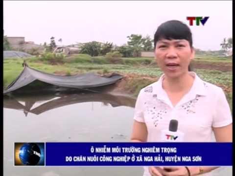 Ô nhiễm môi trường nghiêm trọng do chăn nuôi công nghiệp ở xã Nga Hải, huyện Nga Sơn