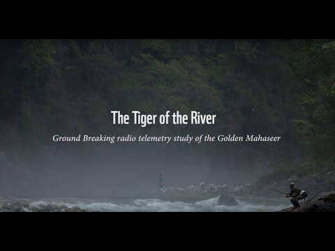 The Tiger of the River