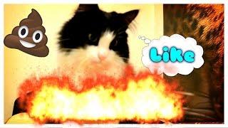Эпик видео!0/--/Мой Кот...