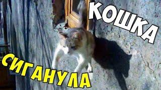 Кошка СИГАНУЛА с окна 4 этажа! Жуть!