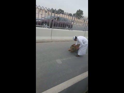 TIGER ON DOHA ROAD, QATAR