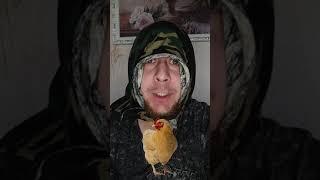 Анекдот Вовочка Что можно получить от курицы