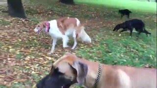 Llegó el Otoño al parque y llevamos a las dos cachorras borzoi a qu...