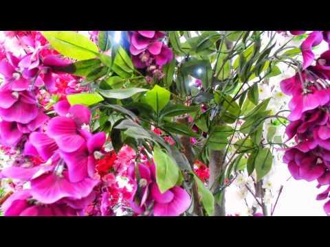 Декоративные деревья для сада купить декоративные для интерьера квартиры ландшафта сада дачи дома