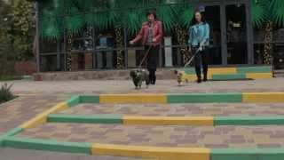 Все О Домашних Животных: Дождевики Для Собак