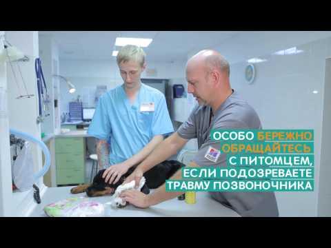 Переломы костей у животных – Ветдоктор – ответ 1
