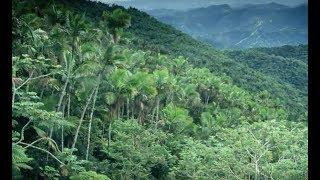 écocide : les forêts disparues de l'île de Pâques