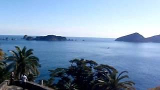 猪崎鼻公園の展望台から太平洋を見渡すサモエドさんごまるです。