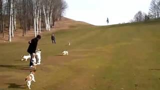 ここはゴルフ場ですが、オーナーの許可を得て遊ばせています.