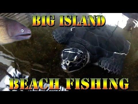 Baby Sea Turtles - Catching Moray Eel - Big Island Beach Fishing Hawaii - Braddahs On Da Shore 27