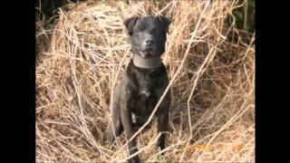 Patterdale Terriers Hunting Ireland