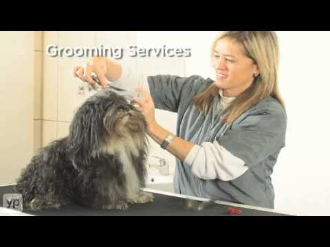 Pet Spa | Doral, FL | Kennels | Pet Grooming & Massage