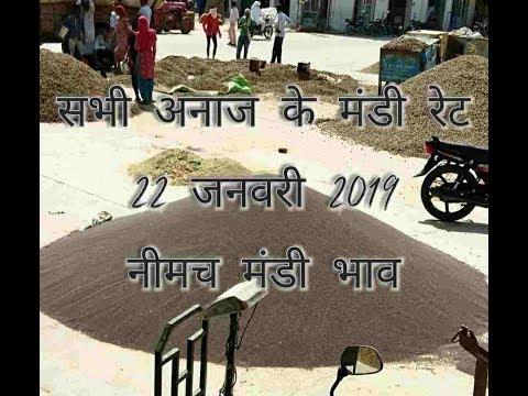 Neemuch Mandi Bhav // Anaj Mandi Bhav 22-01-2019 // नीमच मंडी की आवक व तेज़ी मंदी रिपोर्ट