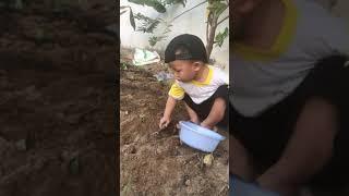 Cách trồng đậu đen thời Covi