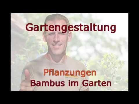 Gartentipps Bambus - Youtube Bambus Im Garten Tipps