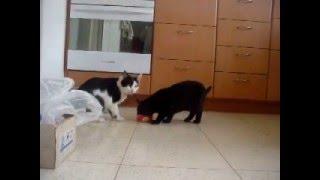Кошки вместе едят